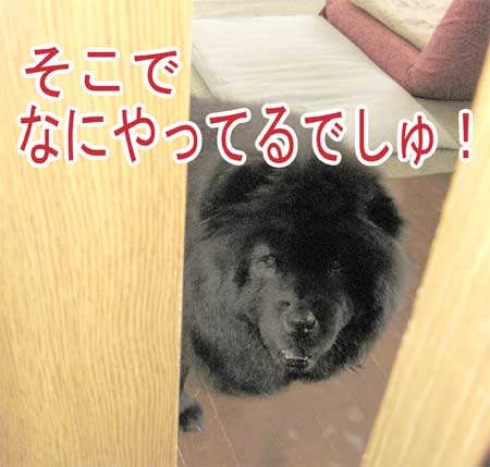 09_04_05q.jpg