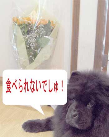 09_06_13a.jpg